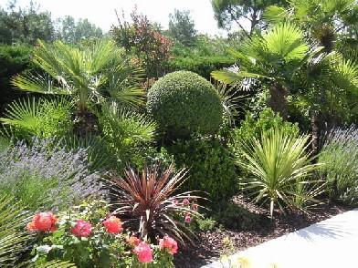 plantes m dit rann enes autour de la piscine bandeau. Black Bedroom Furniture Sets. Home Design Ideas