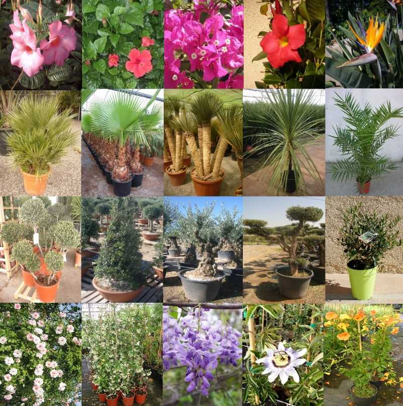 MONTAGE-PHOTOS-PLANTES-SILVER-IMPORT-50